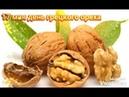 17 мая день грецкого ореха