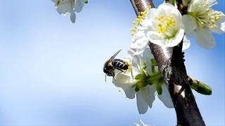 Nikos Ignatiadis - Beautiful spring - The Beginning.(Beautiful and relaxing music)
