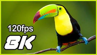 8K VIDEO (ULTRAHD) 120FPS NATURE RELAXATION VIDEO WILDLIFE ANIMALS AND BIRDS