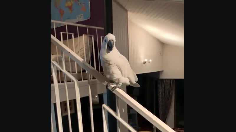 Ganxsta Parrot (orig. by SlyFox)