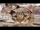 ебанутый кот в наушниках флексит блять