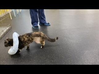 Видео от Оздоровительный комплекс для животных ФитнесДог