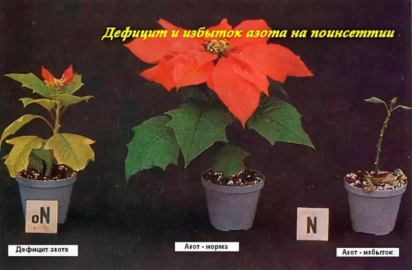 ПРИЗНАКИ ПЕРЕИЗБЫТКА УДОБРЕНИЙ, изображение №2