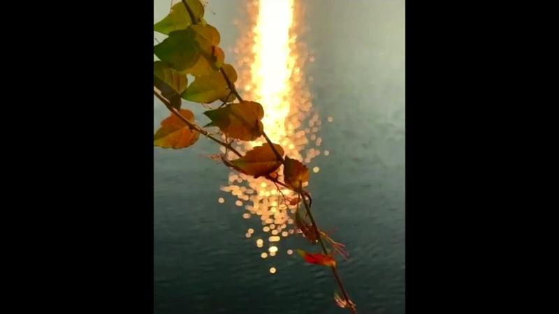 1 Солнцемёд Sun Honey Melody Бексонечный лунный свет Beksonechny moonlight 2 Мелод