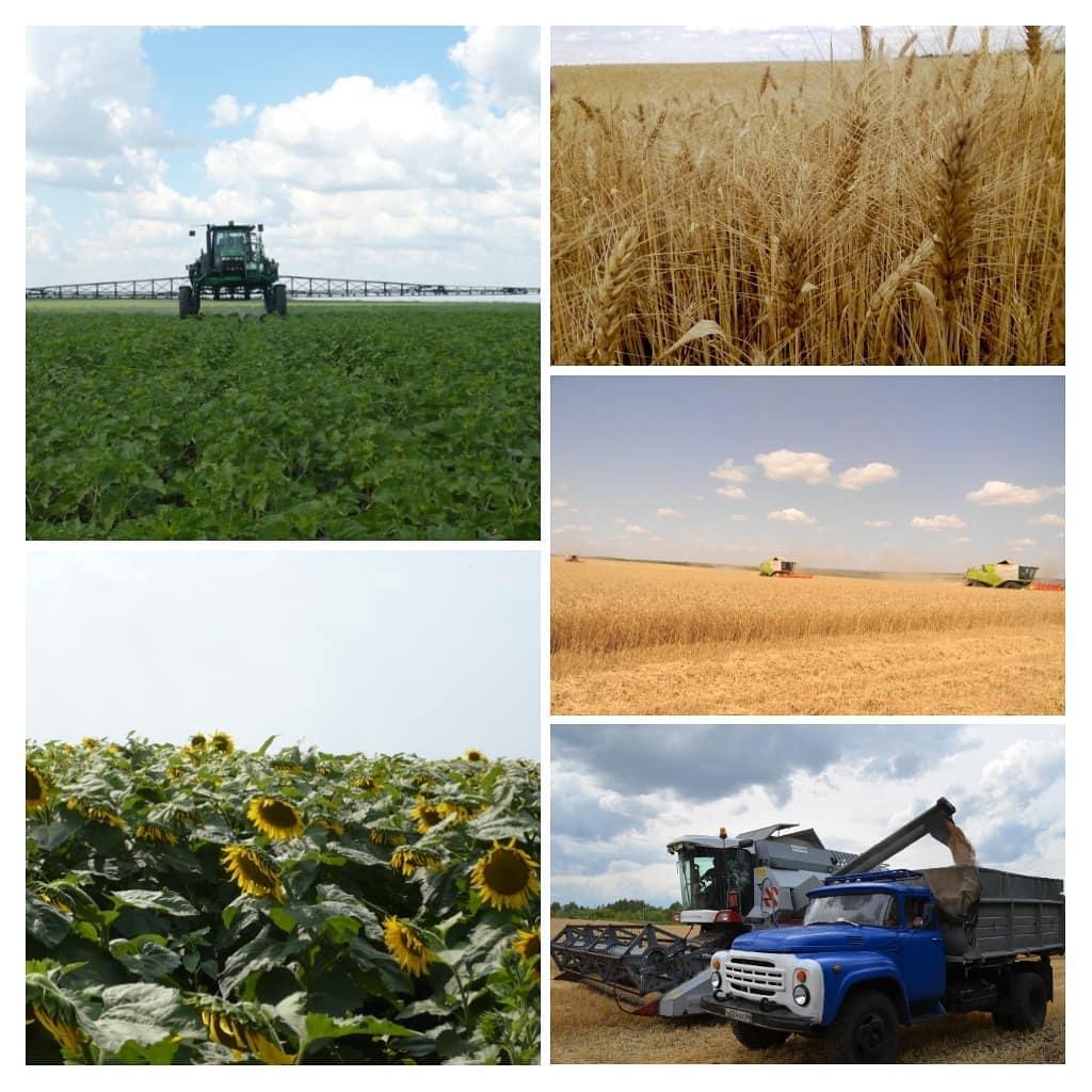 Сегодня в Красноармейском районе проходит выездное заседание областного штаба по проведению сезонных сельхозработ, в котором участвуют и представители Петровского района