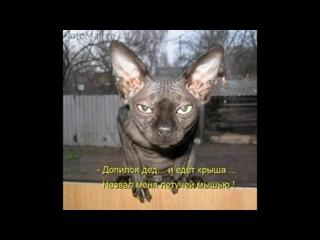 СФИНКСЫ - это АДСКИЕ  КОШКИ и по-ЧЕРТОВСКИ смешные - Hellcat - sfinsky and it is damn funny (1)