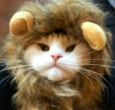 Iron Lion фотография #29