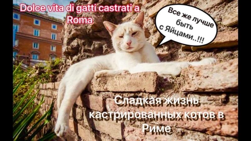 DOLCE VITA DI GATTI CASTRATI A ROMA sterilizzati Сладкая жизнь кастрированые котов Рим 29 11 2018