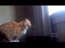 СМЕШНЫЕ видео про ЖИВОТНЫХ 2018! ПРИКОЛЫ про котов и собак