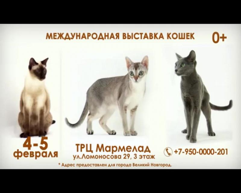Выставка_кошек_4-5_февраля_2017