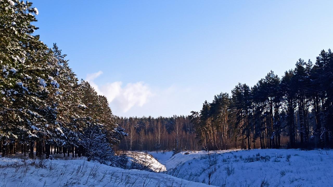 Сказка в Лужковском лесу