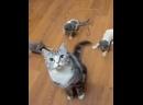 Хвост и трое котят