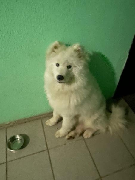 Найдена собака, 1-я Ревсобраний дом 6А.(Живые и ме...