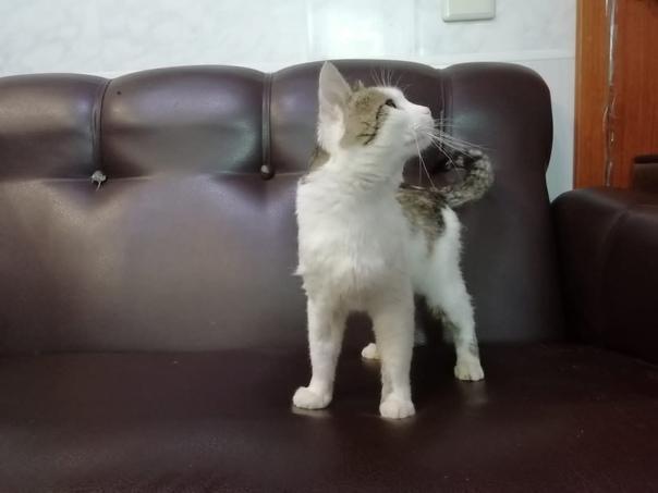 Особенный котик ищет дом.Очень ласковый,на отлично знает ...