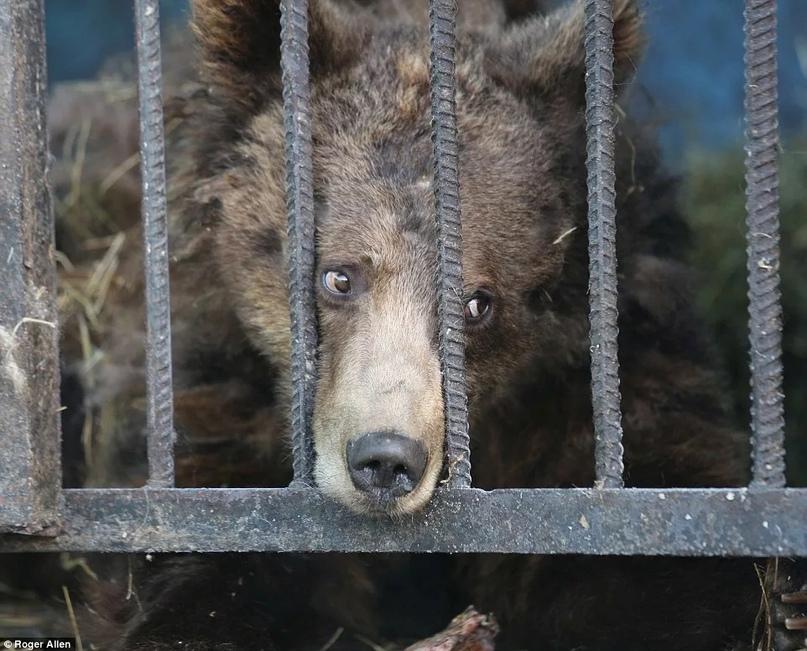 Зоопарк «Орто Дойду» оштрафовали за нарушение правил содержания животных