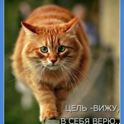 Дима Хороший