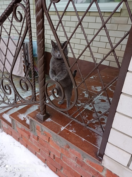 Пропал кот в районе совхозного поселка. Был с чёрн...