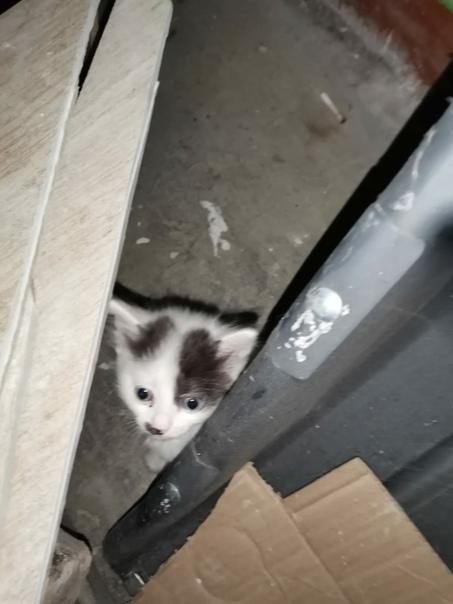 Подкинули в подъезд маленьких, беззащитных котят. ...