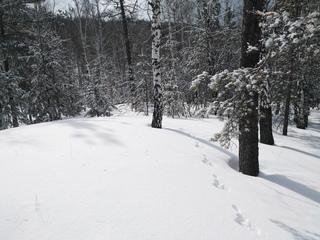 Продолжаем ловить последние недели снега