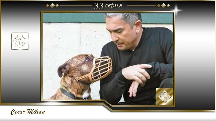 33 серия Сезар Миллан Переводчик с собачьего Chip lussi Henk Betty Leo