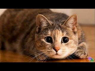 «Отомщууууу!» – решила кошечка Клео, увидев, как какой-то предмет расстроил её хозяйку