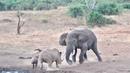 Носорог прёт напролом. Самые Эпичные Кадры с Дикими Животными За 5 Минут