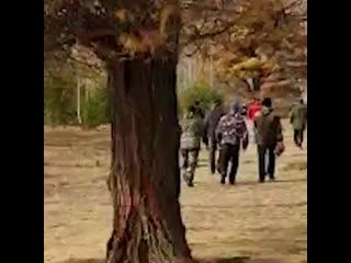 В Башкирии ищут тех, кто спилил 200-летние лиственницы