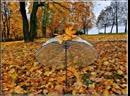 Виртуальная прогулка по осеннему парку Соберем гербарий осени Абонемент МЦБ