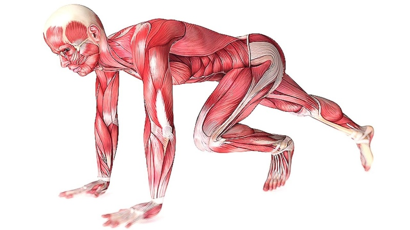 Это Заставит Мышцы Расти Узнай 10 Главных Факторов