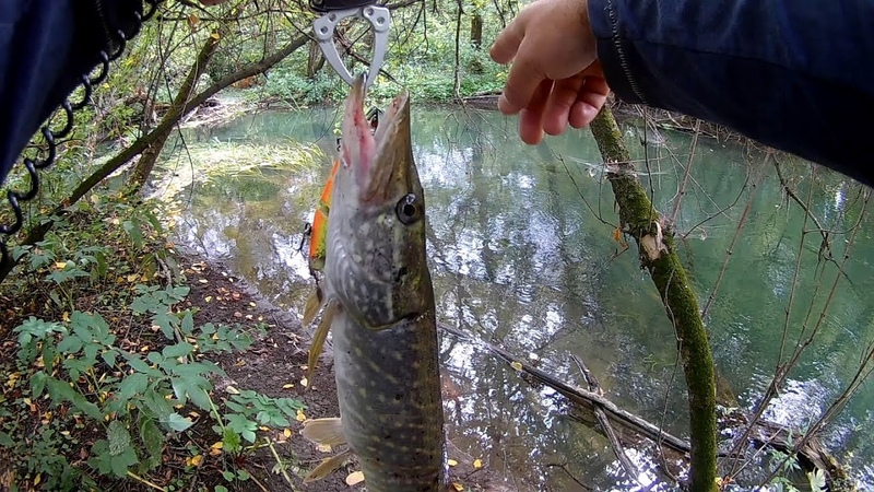 Ловля щуки на малой реке Ловля щук на воблеры