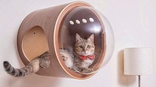 Amazing Pet Toys & Gadgets / That Are On Another Level !