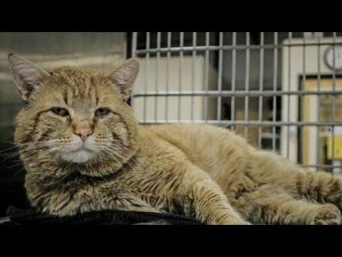 Огромный рыжий кот очутился в приюте и… внезапно заговорил с людьми