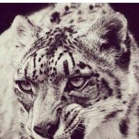 Фотография профиля Бекзата Копбаева ВКонтакте