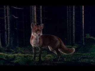Ylvis - The Fox Russian Subtitles русские субтитры Что же говорит лиса