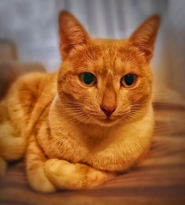 Говорят, что у кошек девять жизней 😉  Однако, благодаря нашим пожарным и спасателям, у некоторых из семейства кошачьих, есть еще и дополнительные бонусы, как у кота Прохора –  героя нашей рубрики #питомцыМособлпожспас 🐾 🐈  Вторую жизнь коту Прохору подари