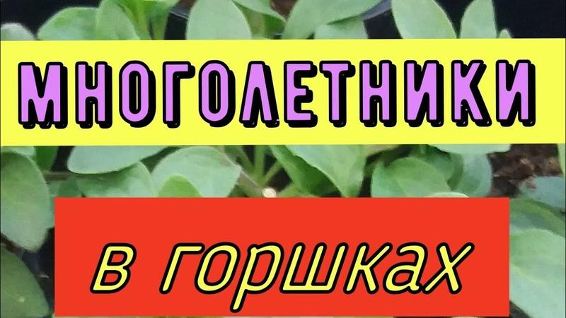 Ответы на часто задаваемые вопросы Выращивание лилий пионов клематисов в горшках