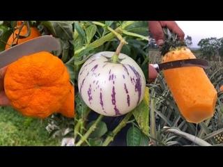 Farm Fresh Ninja Fruit Cutting (Oddly Satisfying Fruit Ninja)   Part 6