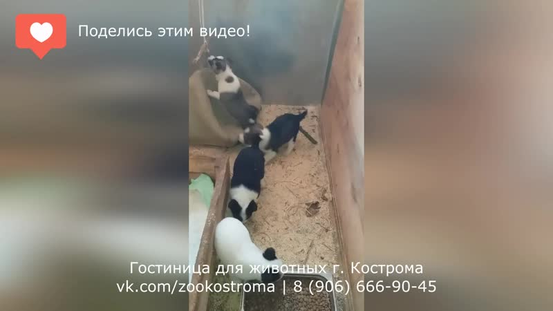 Эти животные ищут дом! (Кострома) 3 Щенки возраст 1,5 месяца