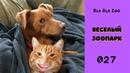 Говорящие коты. Веселый зоопарк. Озвучка котов. Приколы с животными / Подборка 027