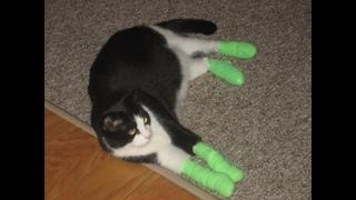 Что будет, если удалить когти у кошки?