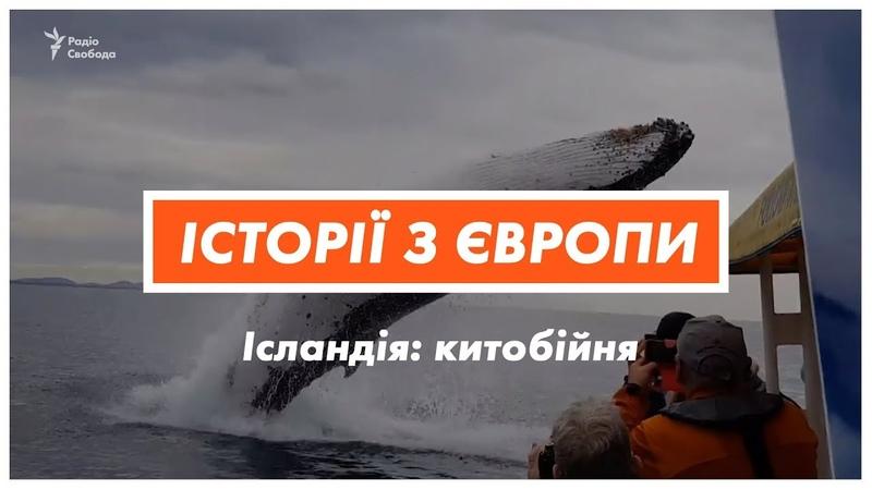 Вбивство китів. Чому Ісландія щороку вбиває 161 тварину? | «Історії з Європи»